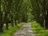 ash-lawn-cropped_dsc5617web