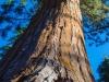 Sequoia2 (1 of 1tri LEAF flower web_DSC3423
