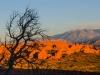 Sunset panorama (1 of 1tri LEAF flower web_DSC2502