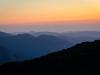 sequoia sunset (1 of 1tri LEAF flower web_DSC3443