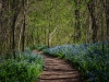 Blue-bell-trail_DSC0126-web