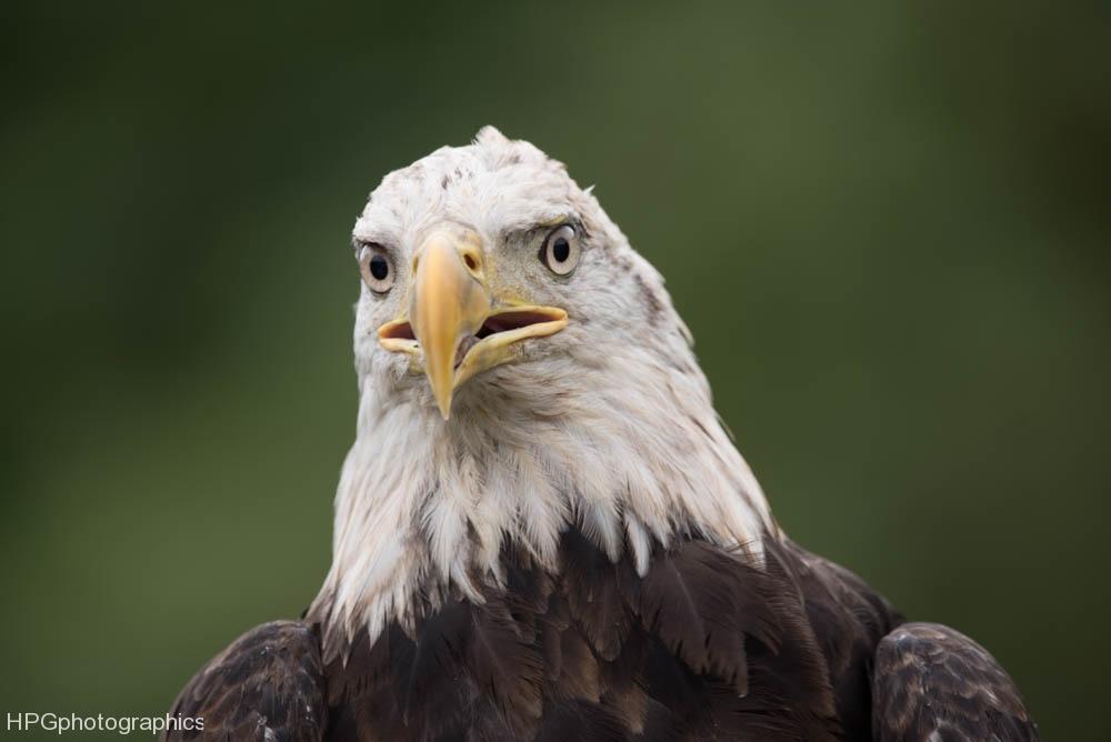 Eagle2 (1 of 1_DSC3286