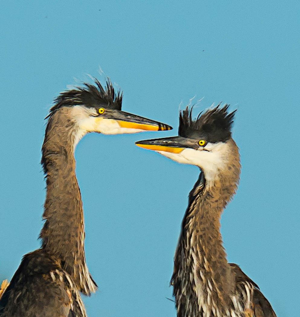Heron kids (1 of 1Heron kids_DSC9729