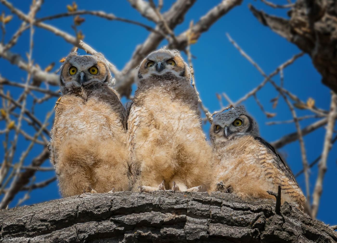 Owl tripletts (1 of 1_DSC9213-Edit-Edit-Edit-Edit