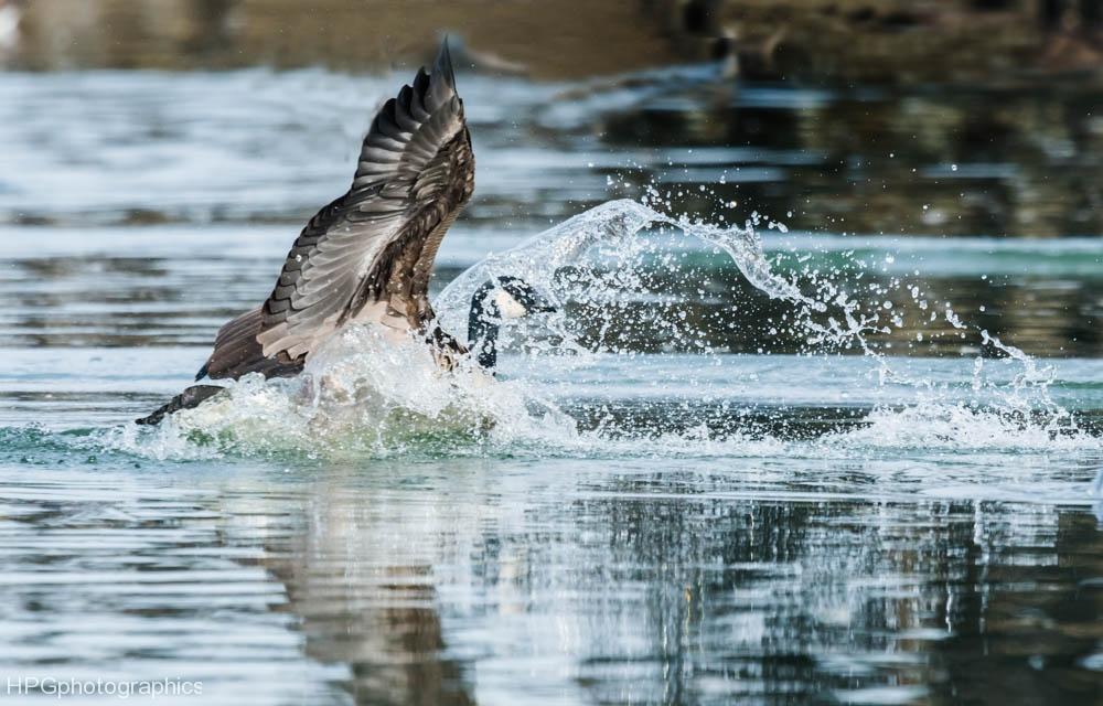 Splashdown (1 of 1Splashdown_DSC2432
