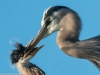 GBH feed (1 of 1_DSC0385-Edit-Edit