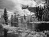 Colorado River in Rocky (1 of 1tri LEAF flower webCol RiverDSC_0073-Edit-Edit
