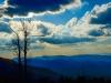 Skyline-treeDSC_1595-web