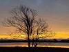 tree-at-sunsetdsc_2579web