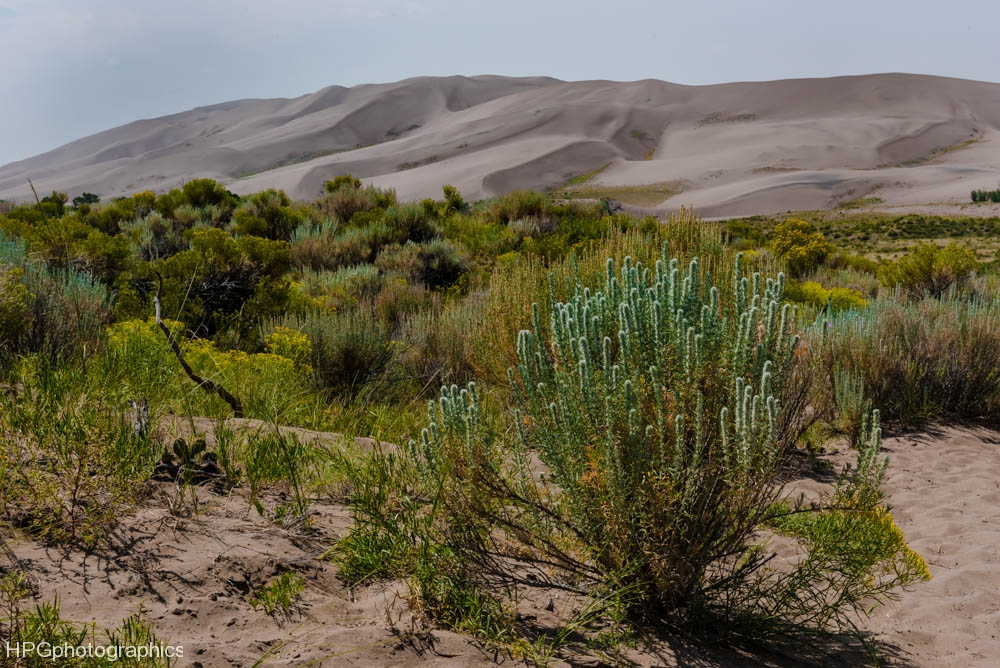 Dunes and sage (1 of 1_DSC2756-Edit