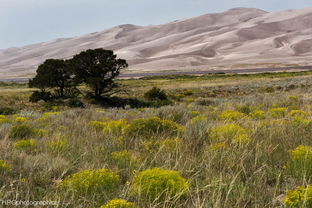 Dunes and wildflowers (1 of 1_DSC2752-Edit