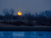 Littleton Super moon (1 of 1_DSC8849-Edit-Edit-Edit