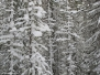 Colorado - winter