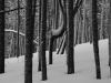 bandw-treesdsc_3783web
