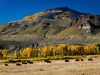 Cottonwood-pass_DSC2374-web