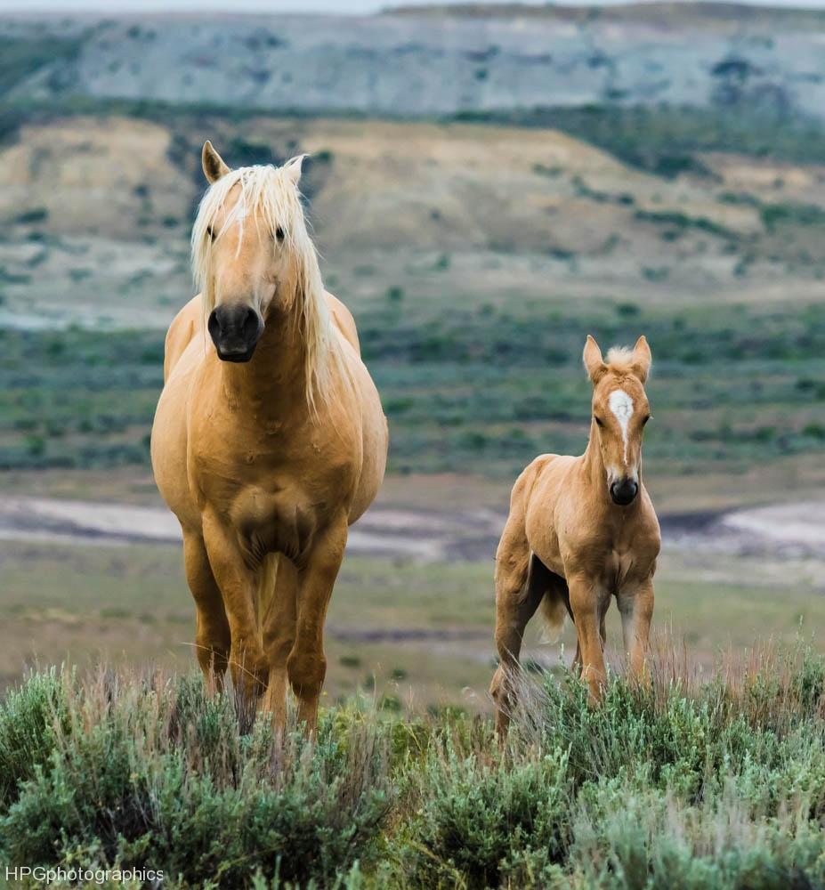 Horses1 (1 of 1_DSC0984