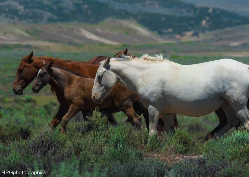 Horses2 (1 of 1_DSC0920