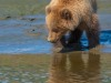 Bear-cub-reflection-1-of-1DSC_4175