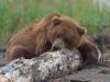 Bears10-1-of-1DSC_4632