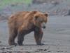 Bears11-1-of-1DSC_4563