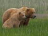 Bears12-1-of-1DSC_4515