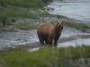 Bears6-1-of-1DSC_4698