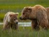 bears1-1-of-1DSC_3433