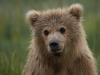 bears2-1-of-1DSC_3567