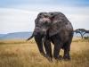 Big elephant2-2931