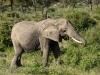 Elephant2-2758