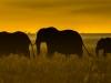 Elephant3-6753