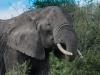 Elephant5-5538