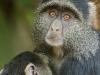 baboon pair2-3846